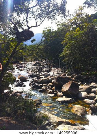 A stream through the forest, Daintree Rainforest, Queensland, Australia