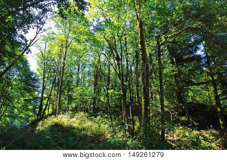 Forest foliage on hiking trail in Porland Oregon