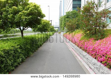 Commerical Building, Footpath, Tree And Blossom Flowers