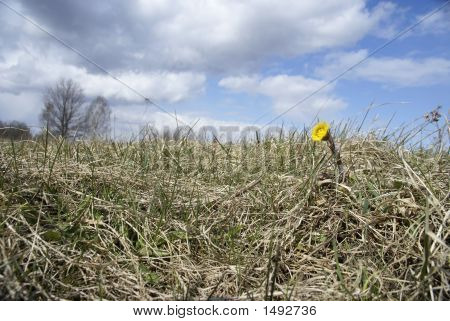 Landscape with flower against a background blue sky poster