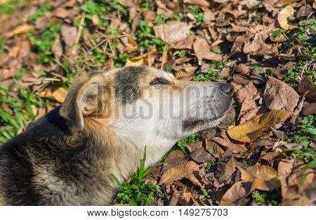 Stray dog's short relaxation under autumnal sun