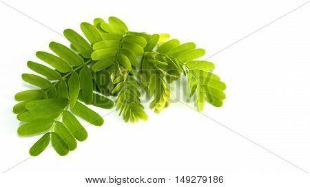 Tamarind leaf set isolated on white background