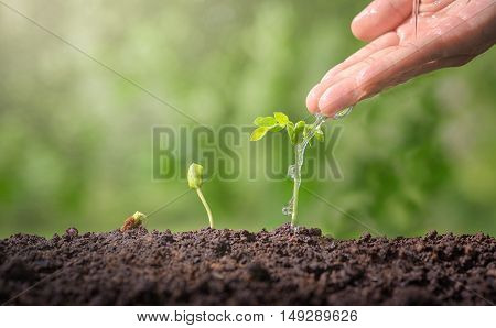 Hands Watering Green Plants.