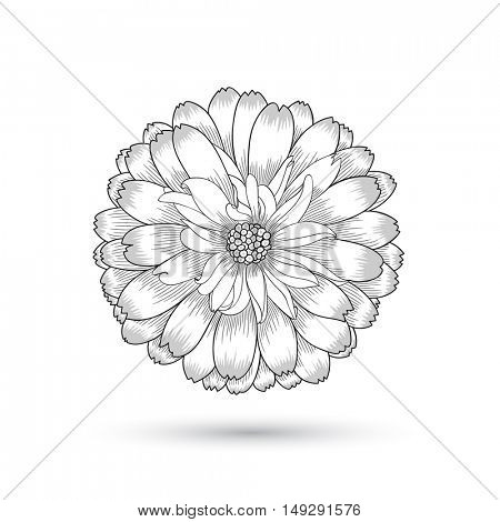 Hand-drawing vector flower chamomile. Element for design.