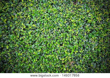 Fresh green grass leaves.Green background with leaves