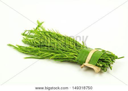 green Acacia pennata isolated on white background