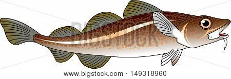 atlantic cod. Editable vector illustration isolated on white background