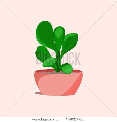 Jade money succulent plant in a flower pot on pink background. Home interior floral design elements. Green plants flowers and nature concept. Tropical exotic botany collection. Vector illustration.