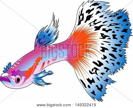 Aquarium fish. Beautiful guppy. Highly detailed vector and illustration