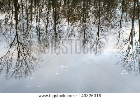 Autumn tranquil background reflection of autumn bare trees reflected upside down in calm dark water surface