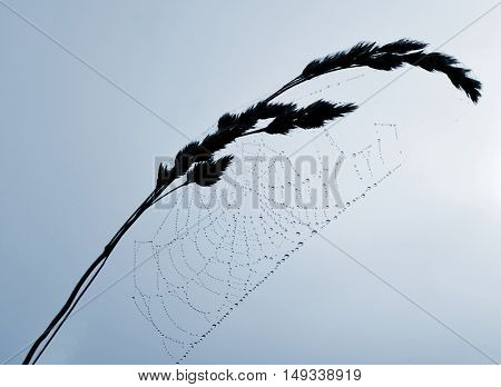 Dewy spider web on the plant.
