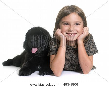 puppy newfoundland dog and child in front of white background