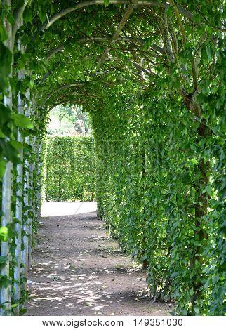 Saint Martin de Boscherville France - june 22 2016 : the Saint Georges abbey garden in Seine Maritime