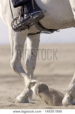 horseman and her Camargue on the beach focus on the paw
