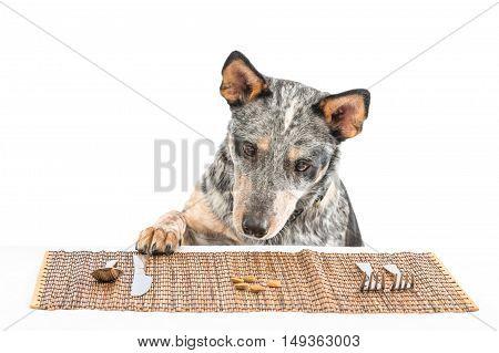 Puppy Dinner