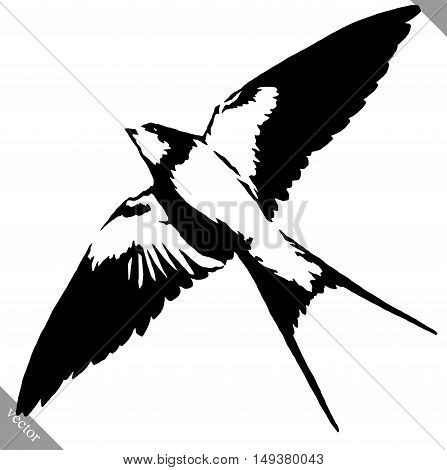 black and white linear paint draw swallow bird vector illustration
