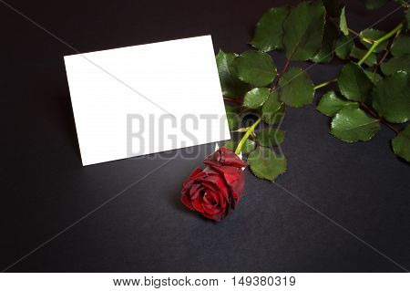 Red rose with empty card for a loving message.