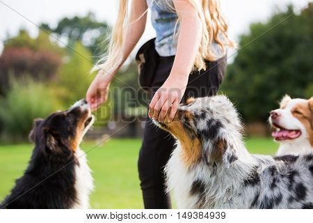 Girl Gives Two Dogs A Treat