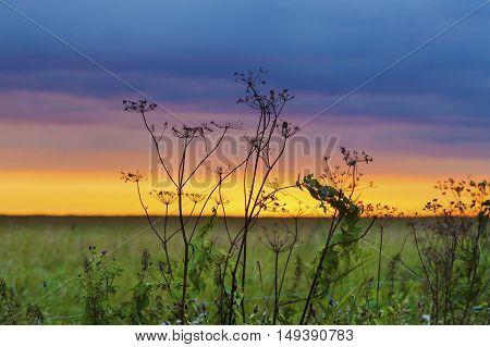 Autumn Grass In Sunset