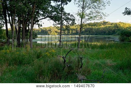 woodlands marshes and lake of normandale lake park in bloomington minnesota