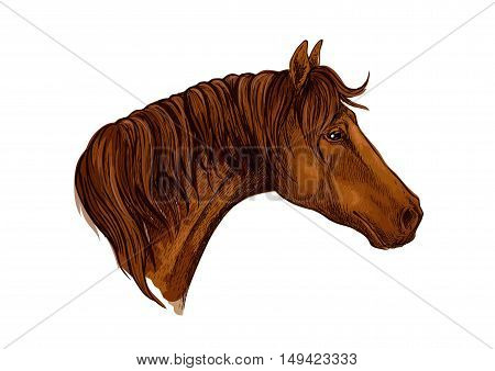 Horse noble profile portrait. Brown mustang with calm look