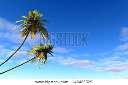 Two palms at sea coast