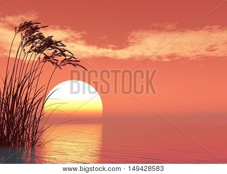 Water plants at sunset - digital artwork