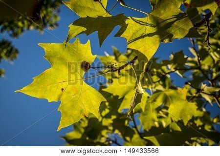 Park In Fall Season In Sant Cugat Del Valles