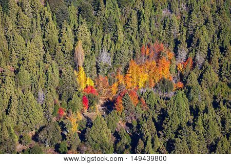 Autumn forest in Nahuel Huapi National Park near the Bariloche Patagonia region in Argentina. poster