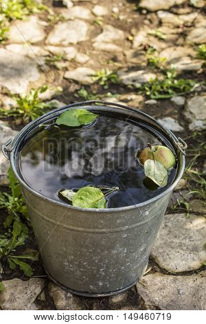 Apple are in a metal bucket with water that stands in old concrete path in a village