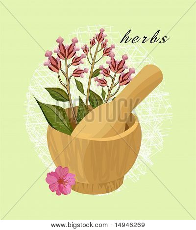 Herbs and cherry flower