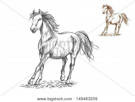 Running white and brown horses. Galloping mustang stallions rushing against wind, Vector pencil sketch portrait