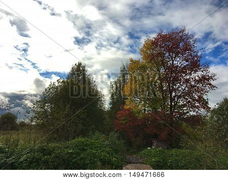 the point showing the beginning of autumn, almost all the trees are green, green grass, but also on the picture you can see a tree with yellow and red leaves on the ground there are signs of autumn trees in the background beautiful sky with clouds