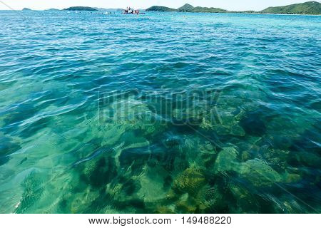 Thailand underwater photo. There are various coral reefs.