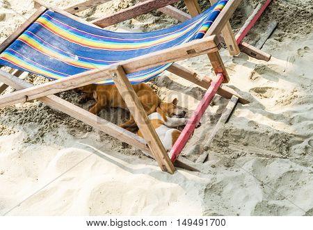 Dog lying on the beach under beach bed.