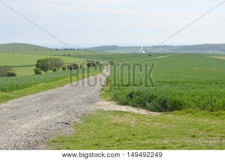 Track across The South Downs above Steyning near Worthing West Sussex England
