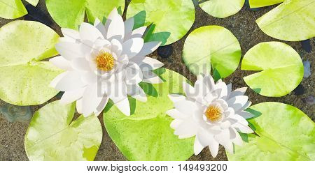 Water lilys on the lake. 3D illustration