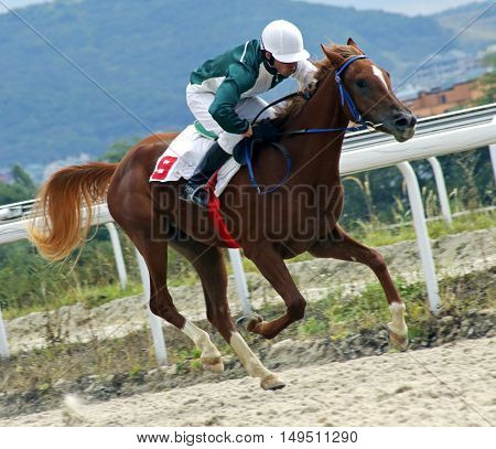 Jockey on horse.Hippodrome of Pyatigorsk (Northern Caucasus) season 2016.