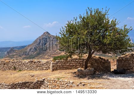 Lonely tree growing among the ruins of an old fortress Acrocorinth ancient against the blue sky and high mountains.