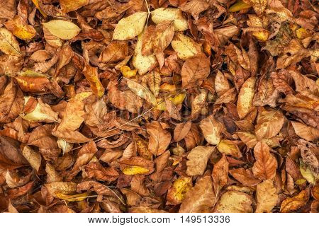 Background of yellow and red leaves lying on the ground in a cloudy autumn day.