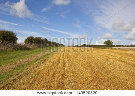 Hawthorn Hedgerow In Autumn