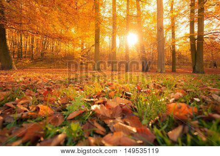 Autumnal Trees In Sunshine.
