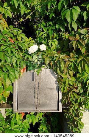 golden urn on cemetery in the bush