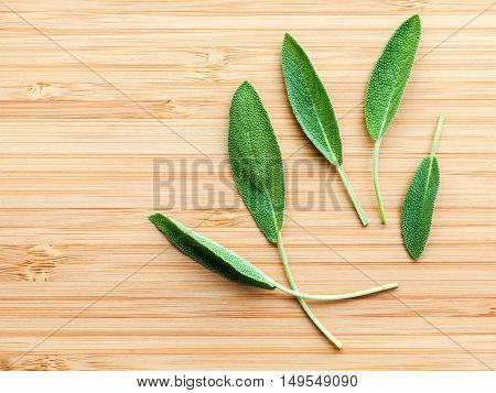 Closeup Fresh Sage Leaves  On Wooden Background. Alternative Medicine Fresh Salvia Officinalis. Fres