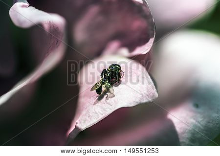 small black spider eating a fly outdoor macro closeup
