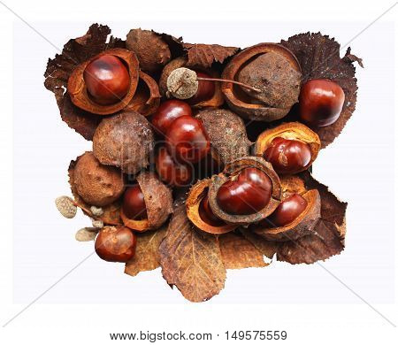 Ripe horse chestnuts isolated on white background
