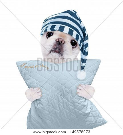 Sleepy dog in a cap with a pillow. Isolated on white.