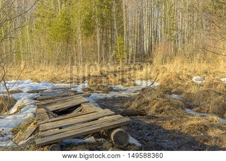 broken spring forest path through the swamp on a sunny day Ural Siberia