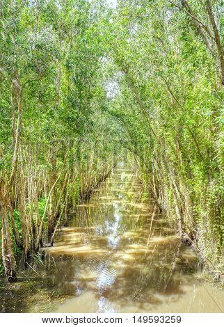 The canal lined with mangrove forest ecosystems are conserved and where the biosphere, green lungs for human habitation