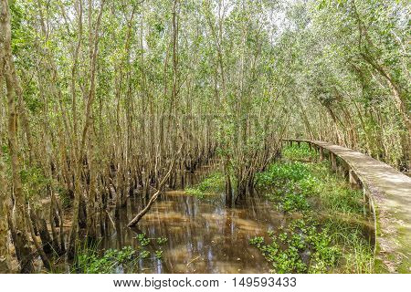 Small road through the mangrove forests high in attracting tourists to relax on weekends
